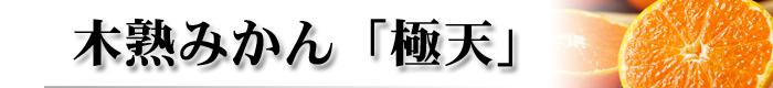 ギフト(木熟みかん極天)