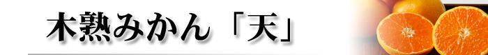 ギフト(木熟みかん天)